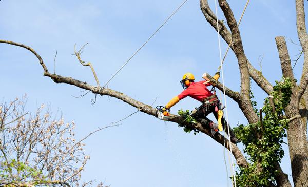 Картинки по запросу Профессиональное удаление деревьев